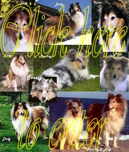 Our Collies
