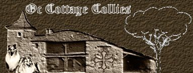 ***Oc Cottage Collies Logo. Click HERE to enter***